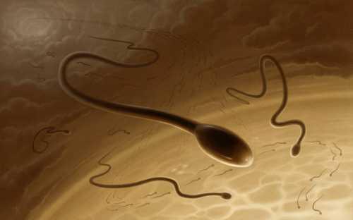 При первой степени патологии вероятность возникновения беременности у партнерши еще есть, при последующих двух очень и очень низкая или практически отсутствует