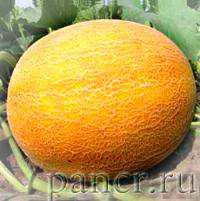 Но для полной уверенности в хорошей реакции организма, начинать употребление сладкого фрукта необходимо постепенно
