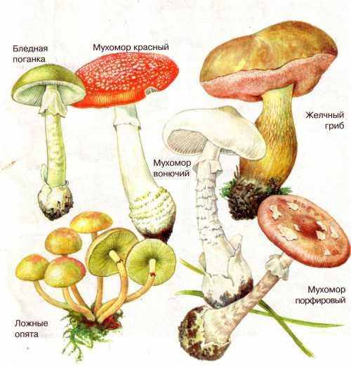 Лечение отравлений грибами проводится в токсико логических отделениях