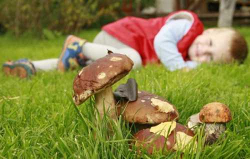 Отравление ядовитыми грибами: симптомы, первая