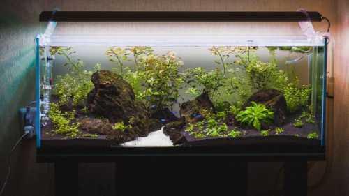 Правила оформления аквариума