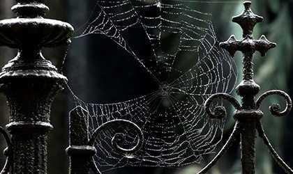 К чему снится паутина, рвать паутину, приснилось,