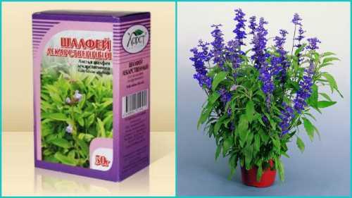 Высушенные соцветия растений добавляются в лечебные сборы