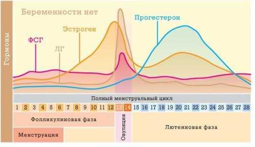 Длительность лютеиновой фазы варьируется от до дней. Допускаются колебания в диапазоне дней