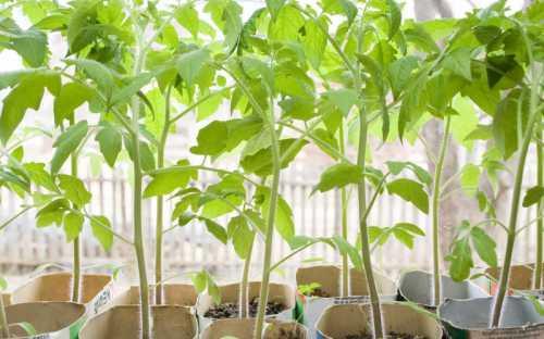 Да и проще ухаживать за растениями, которые смогут сформировать и вырастить много плодов, чем за слабыми саженцами которые дадут столько же плодов