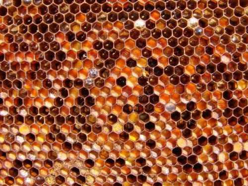 Наиболее чувствителен к пчелиной пыльце был