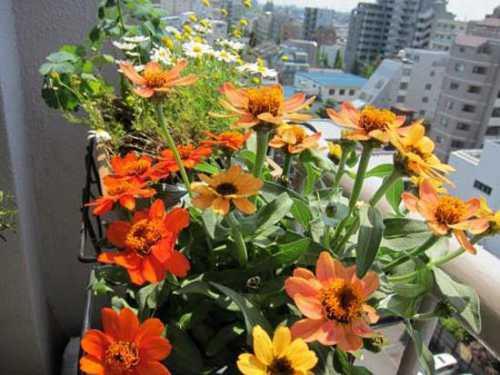 Цветник, сад или огород на балконе: особенности организации